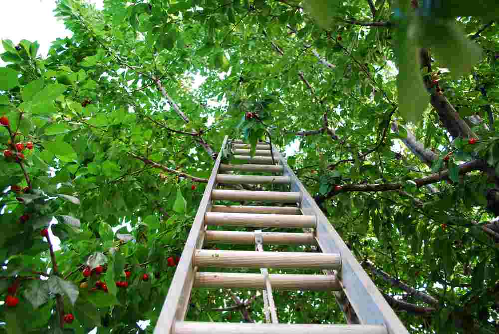 how to secure a ladder to a tree